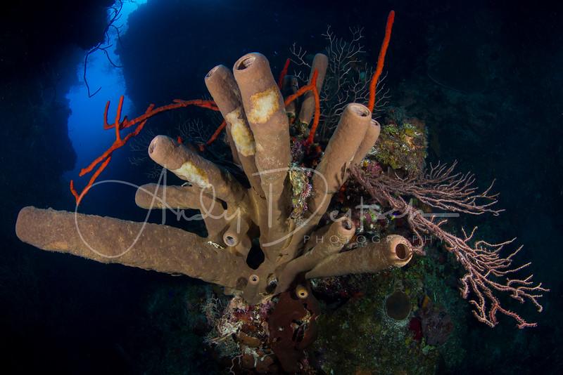 Tube Sponges at Babylon