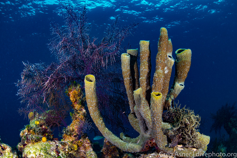 Lighthouse Reef Atoll, Belize