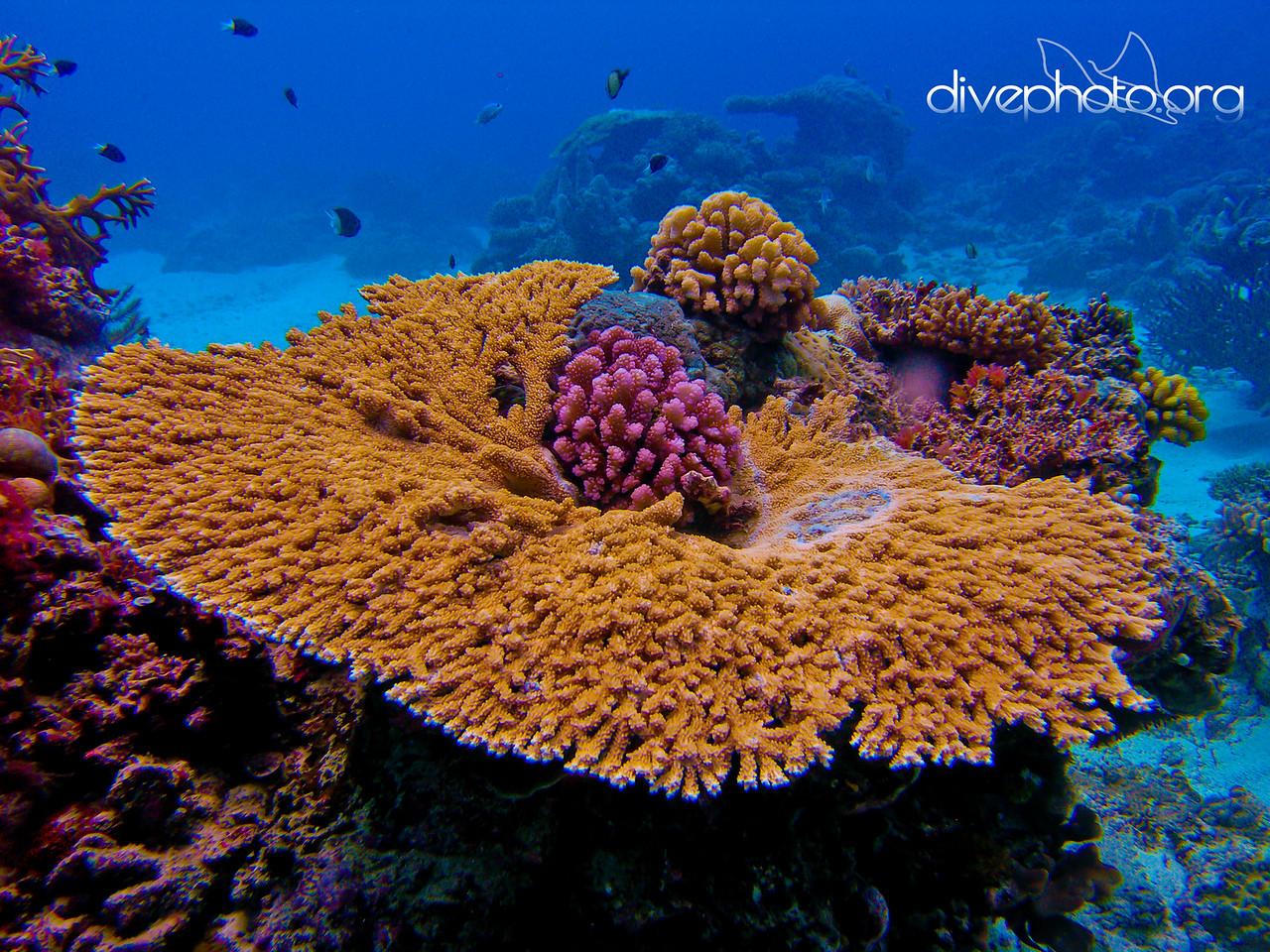 North Horn, Great Barrier Reef, Australia