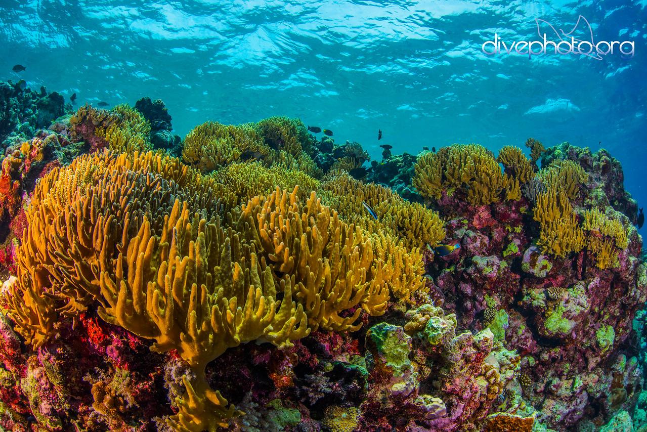 Layang Layang Atoll, Spratly Islands, South China Sea