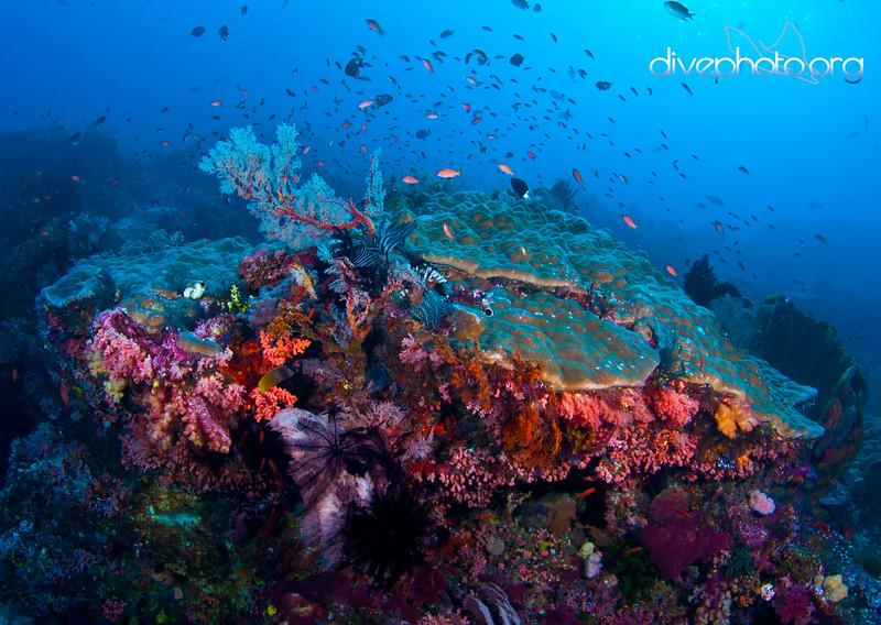 Komodo Island, Indonesia