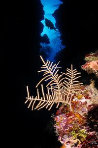 Reef scene 7 (Babylon)