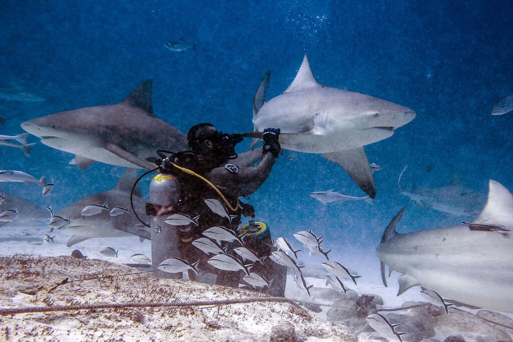 12-bull shark 10