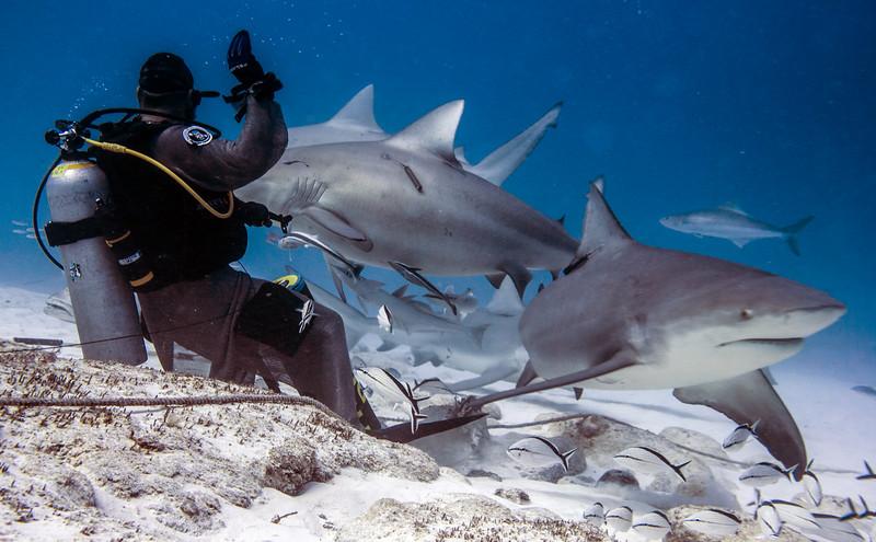 11-bull shark 9