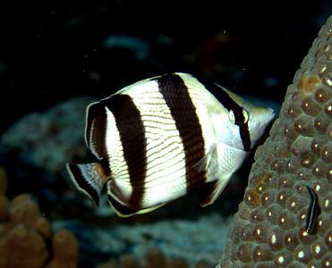 cozumel underwater creatures