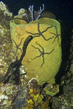 16-sponge - basket