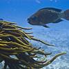 poroussearodandparrotfish
