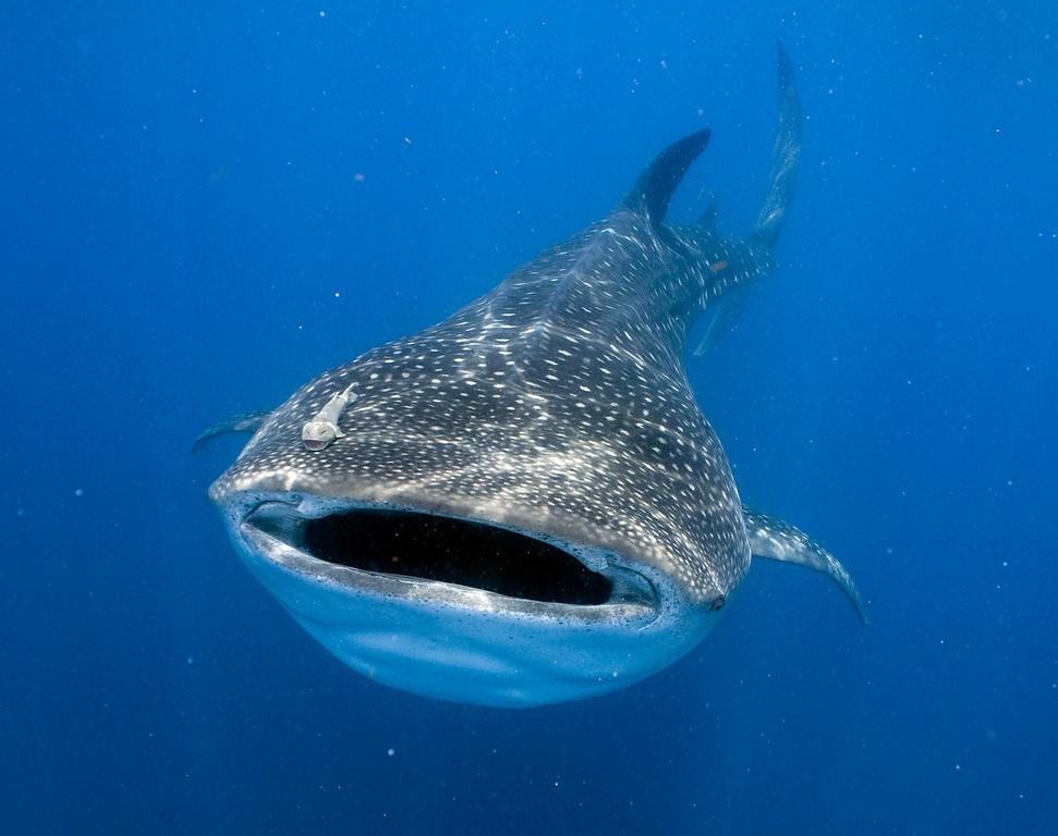 1-shark3