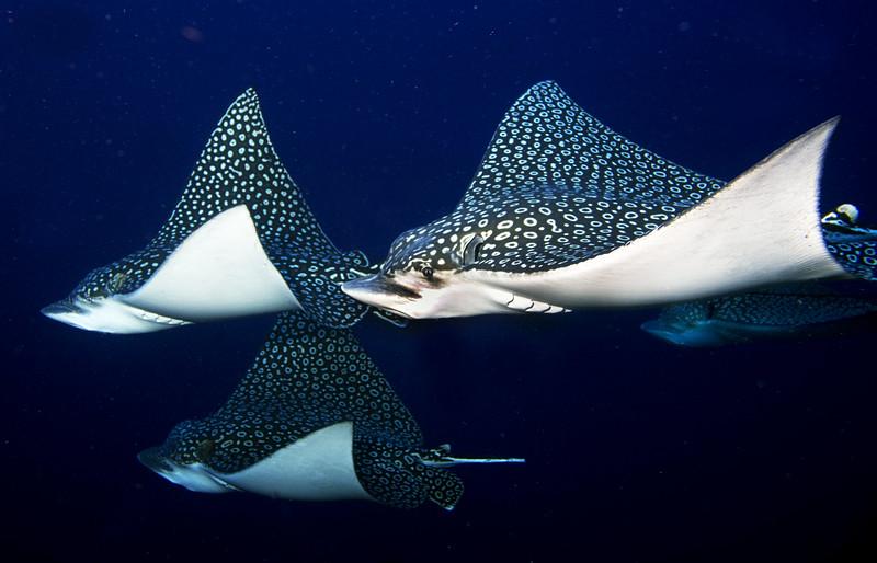 Reefs of Cozumel Top Shots