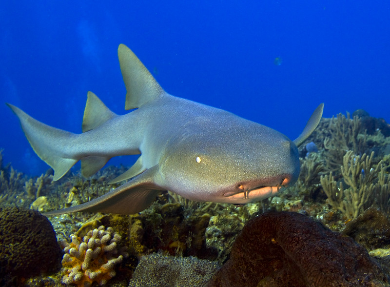nurse shark 12-29-2011 3-48-51 PM