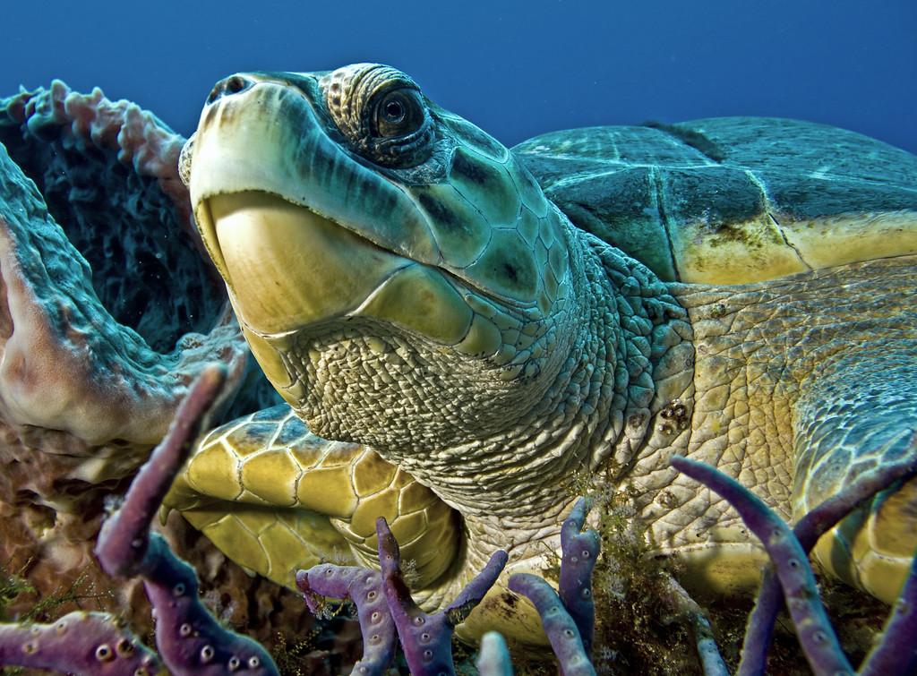 19-turtle - hybrid