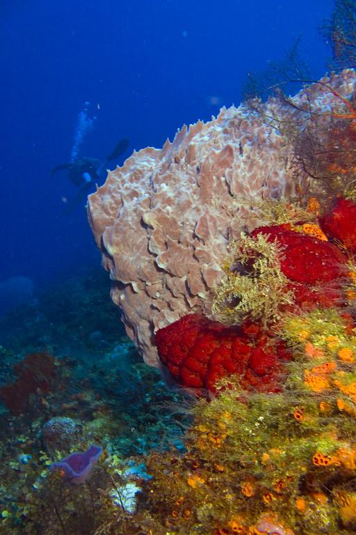 77-sponges 1