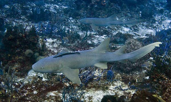 20-sharks 2