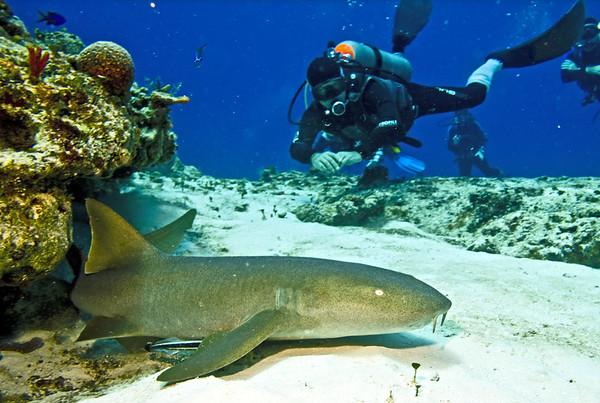 shark - nurse shark 3