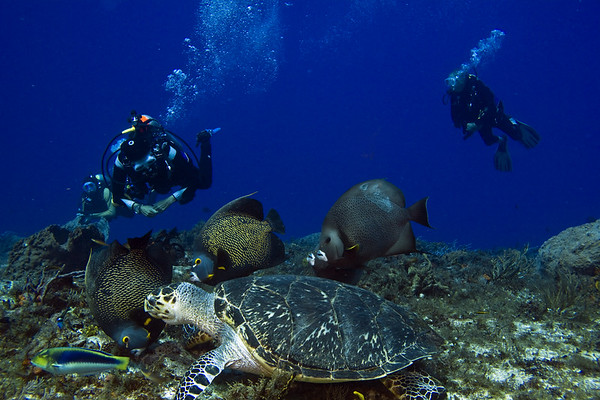 turtle and angelfish2