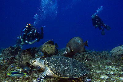 turtle and angelfish2