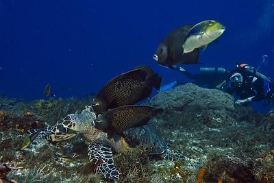 turtle and angelfish6