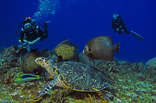 turtle and angelfish