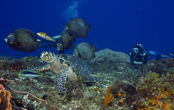 turtle and angelfish5