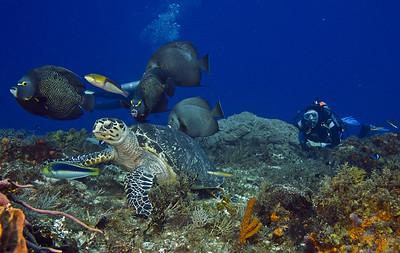 turtle and angelfish5