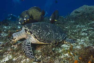 turtle and angelfish 8