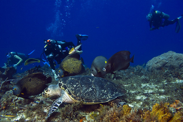 turtle and angelfish3