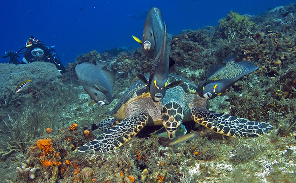 turtle and angelfish 7