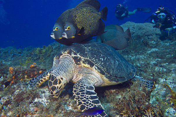 turtle and angelfish 9