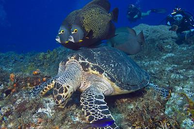 turtle and angelfish 9