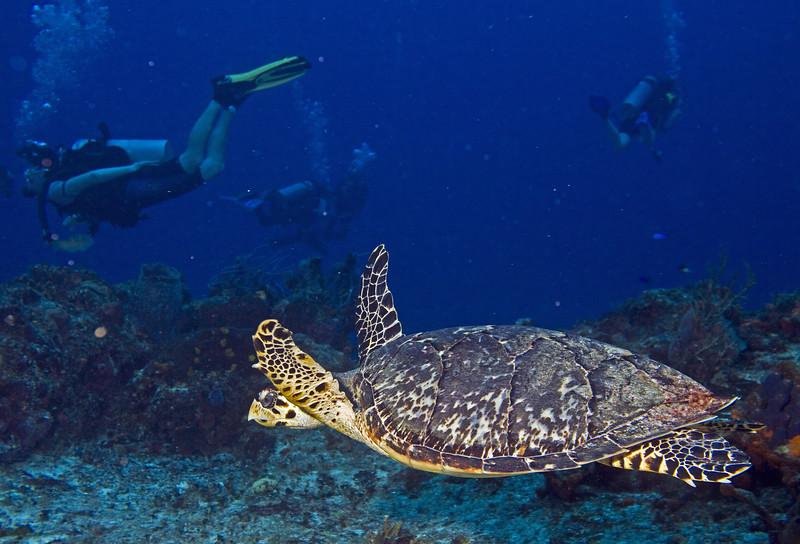 08-turtle