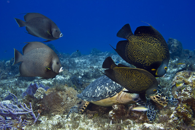 turtle and angelfish 5