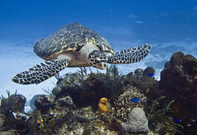 51-turtle2