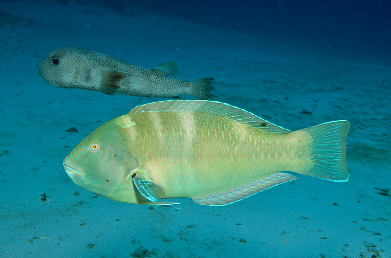 puddingwife