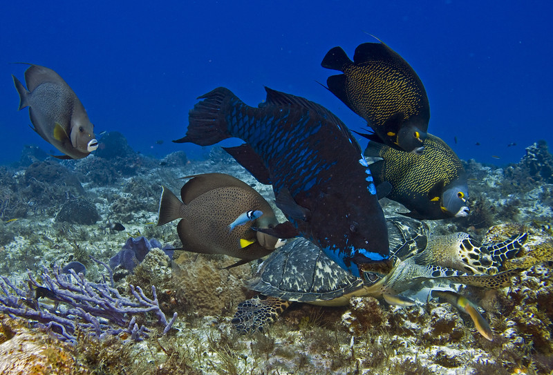 turtle and angelfish 8