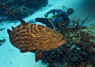 39-grouper - black 3