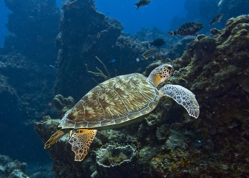 turtle - green 5