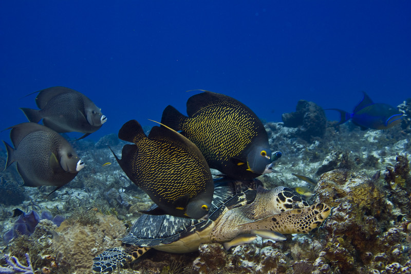 turtle and angelfish 6