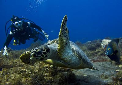 30-turtle - hawksbil