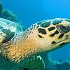 02-turtle