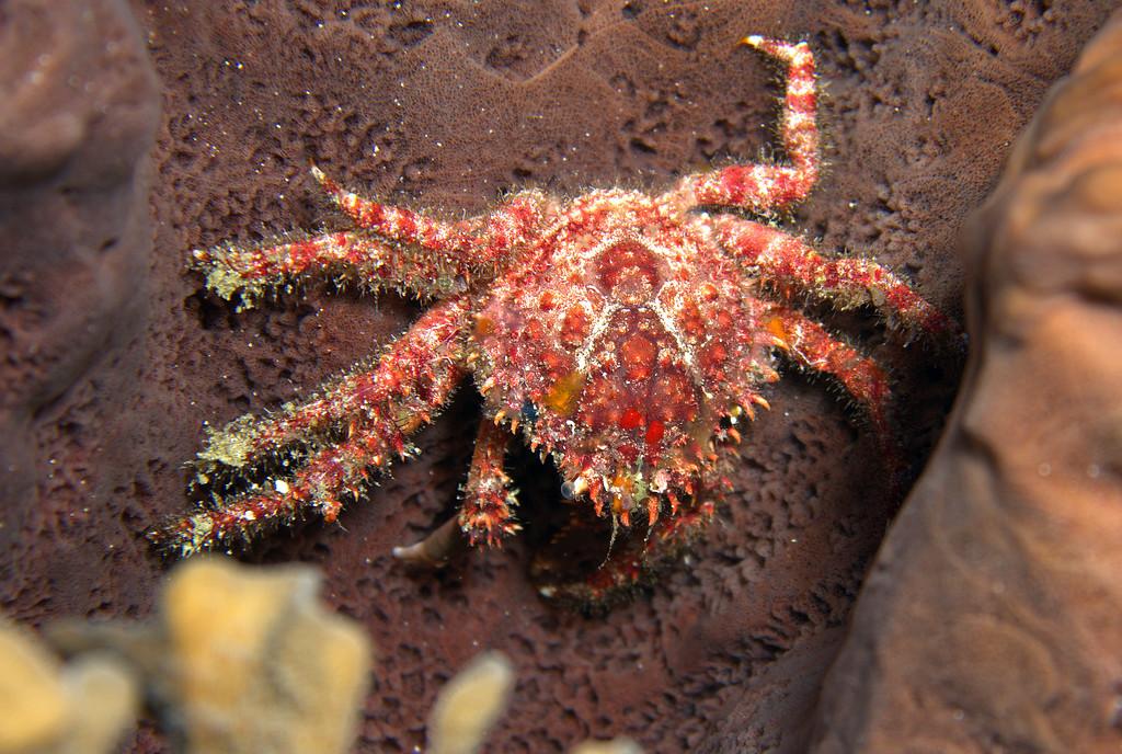 05-crab