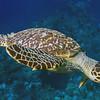 05-little turtle 2