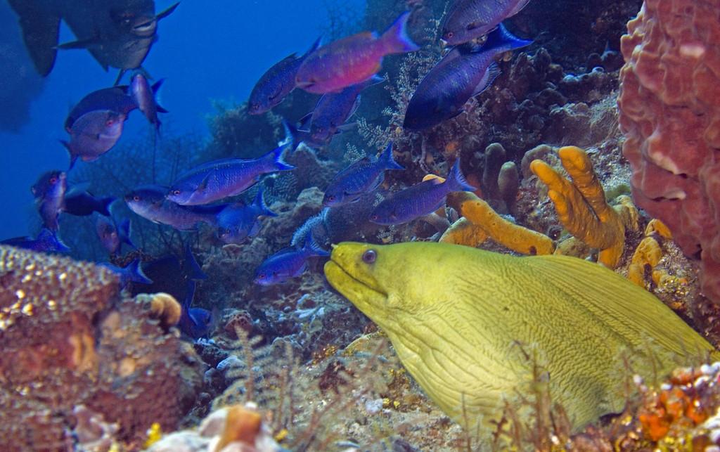 14-moray eel 2