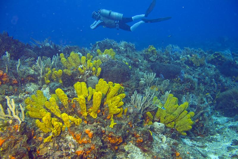 12-tube sponges