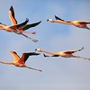 Flamingo Formation