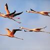 Flamingo Formation