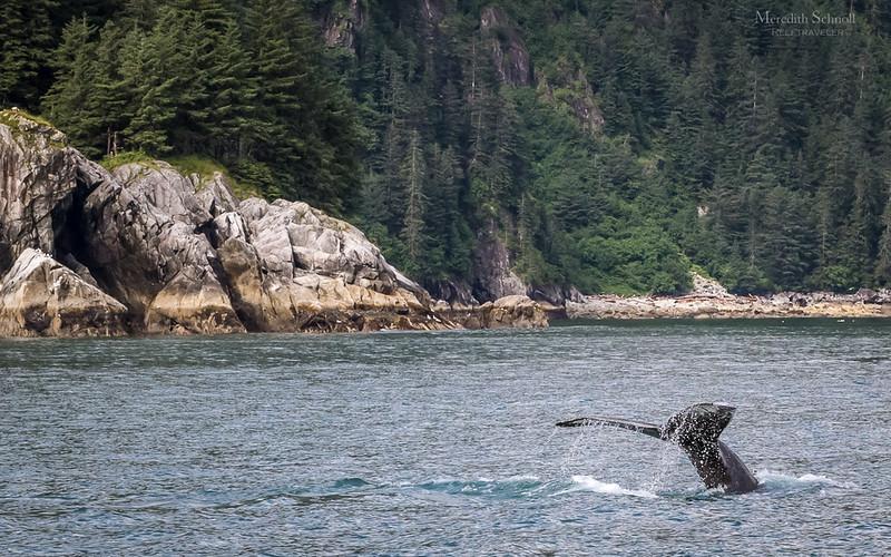 Humpback Whale Fluke in Kenai Fjords National Park