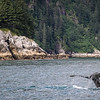 Humpback Whale Fluke in Kenai Fjords National Park