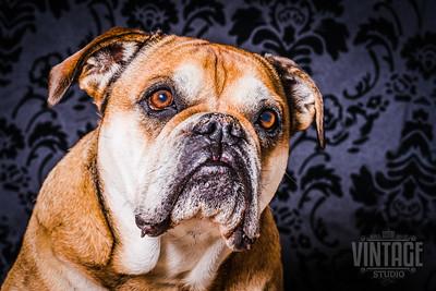 Hundebilder im Fotostudio Alex