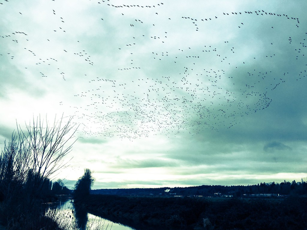 sky of birds - taken from a bike seat