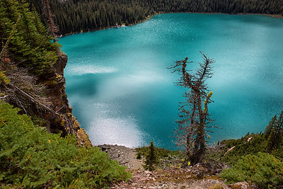Tree Lake O'Hara